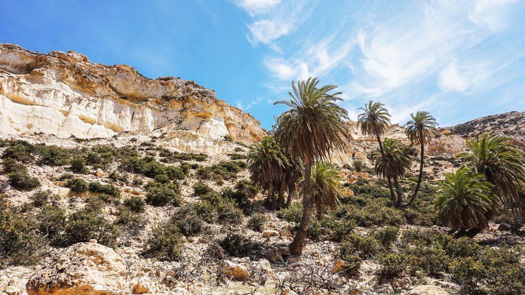Martsalo slėnis Kretoje – pirmųjų krikščionių slėptuvė. Palmės. Kreta, Graikija | Mano Kreta