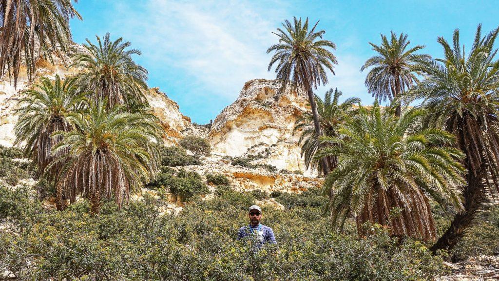 Teofrasto palmės Kretoje. Kreta, Graikija | Mano Kreta