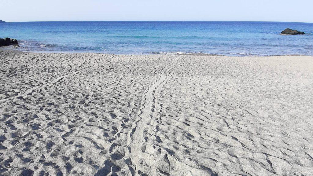 Vėžliukai Kretoje. Vėžlės takas į jūrą. Kreta, Graikija | Mano Kreta