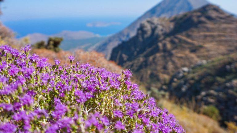 Kada šilta, kada karšta, o kada vėsiau? Sužinokite daugiau apie Kretos orus ir ramiai planuokite atostogas. Klimatas čia nuostabus! Kreta, Graikija | Mano Kreta