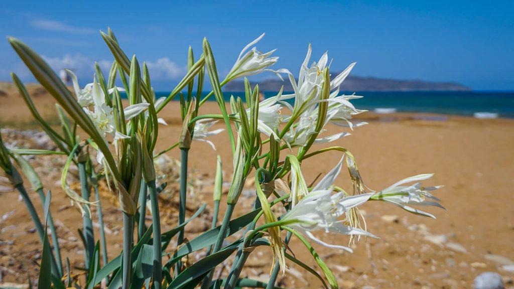 Jei ištiko bėda Kretoje, reikalinga pagalba. Kreta, Graikija | Mano Kreta