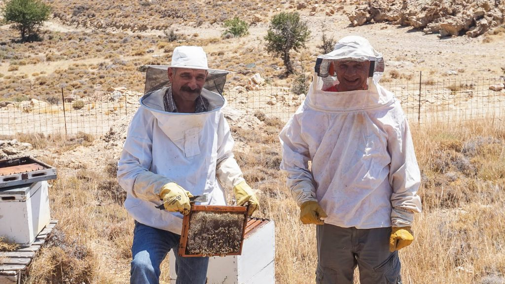 Bičiuliai ir bitės Kretoje. Du bičiuliai kopinėja medų. Kreta, Graikija | Mano Kreta