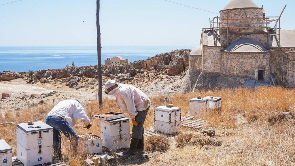 Bičiuliai ir bitės Kretoje. Du bičiuliai tikrina avilius. Kreta, Graikija | Mano Kreta