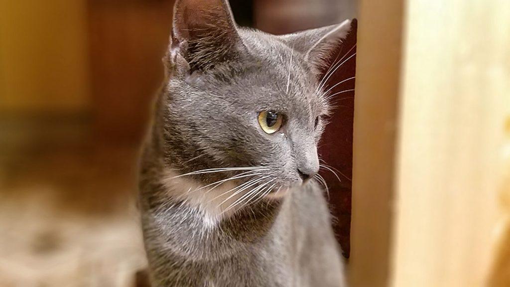 Pilkoji katytė Kreta. Kreta, Graikija | Mano Kreta