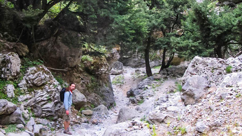 Imbros tarpeklis – senasis takas į Chorą Sfakion. Spygliuočių miškas. Kreta, Graikija | Mano Kreta