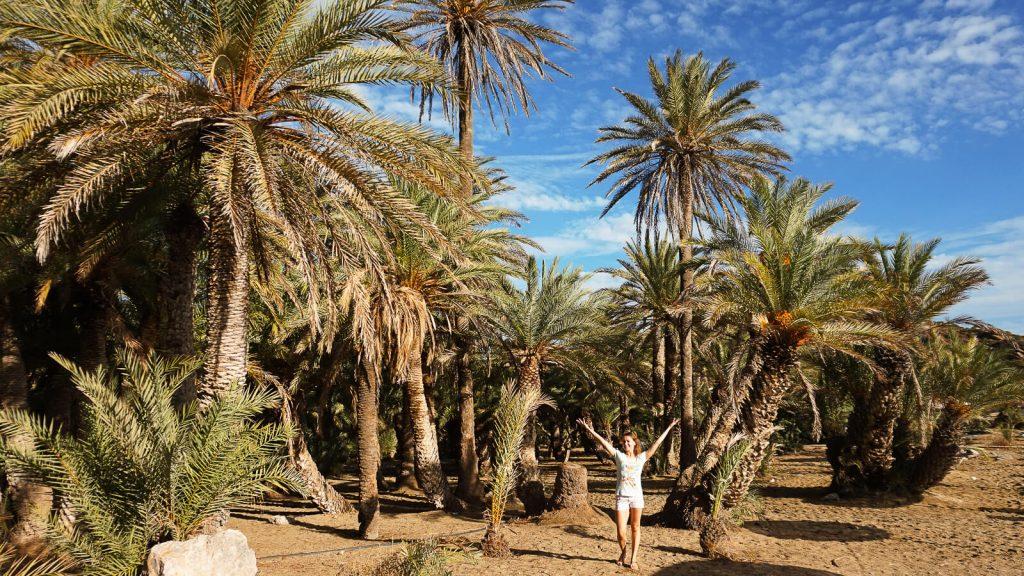 Kretietiškos palmės. Kreta, Graikija   Mano Kreta